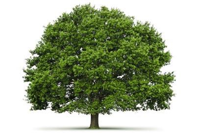 Visitez mon arbre en ligne